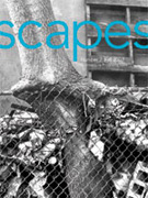 scapes2