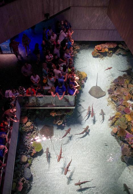 glenn_aquarium